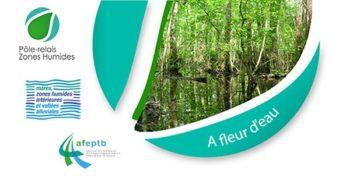 A Fleur d'Eau n°62 – Découvrez la newsletter de décembre 2019 du Pôle-relais mares et vallées alluviales