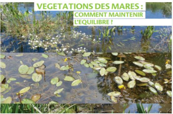 Plaquette «Végétations de mares, comment maintenir l'équilibre ?»